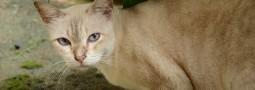 第一次外拍貓咪 – 藍果