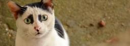 第一次外拍貓咪 – 謎樣