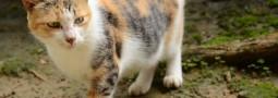第一次外拍貓咪 – 大吃