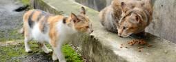第一次外拍貓咪 – 花花